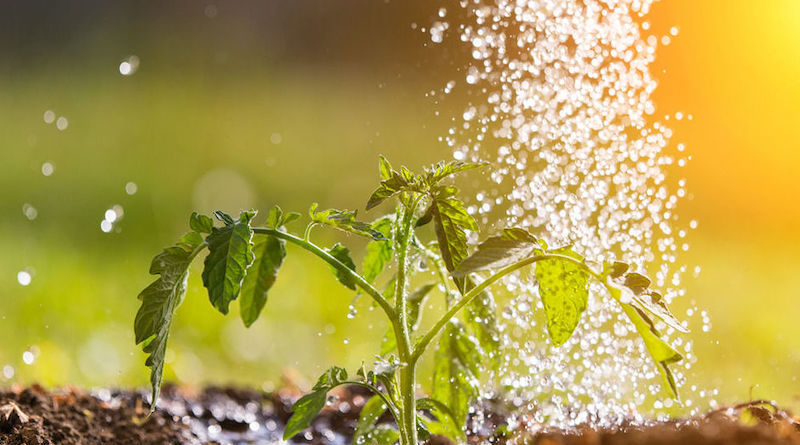 Water & Agriculture