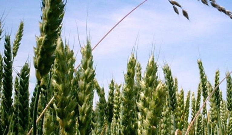 Food System resistance